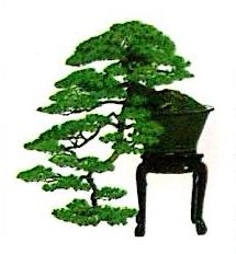 安庆市宜城园林绿化有限责任公司